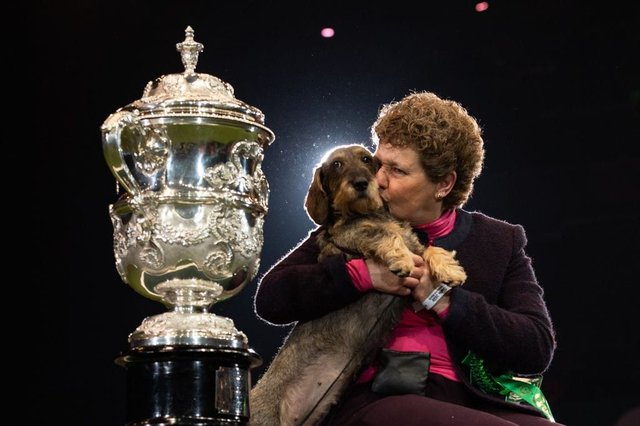 Who Was The Best In Show Winner At Crufts 2020 And Full Results