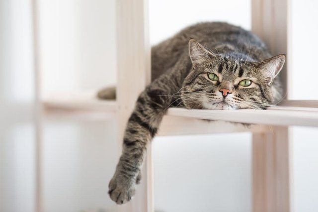 Should Cats Be Kept Indoors During The Lockdown Official Advice From British Veterinary Association Explained Edinburgh News