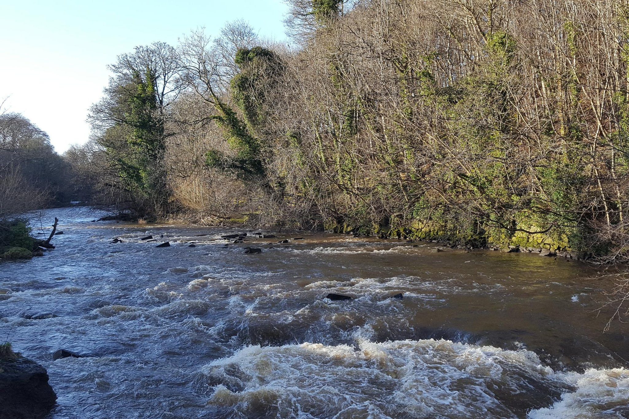All eyes on Cramond as salmon and sea trout fishing poised to re-open on the River Almond