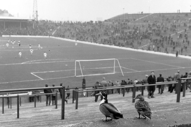 Two ducks enjoy an Edinburgh Derby at Easter Road in May 1966.