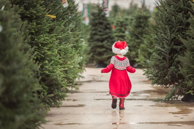 Where can I get a real Christmas tree in Edinburgh? 7 best ...
