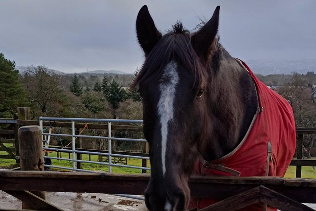 Ravelrig horse