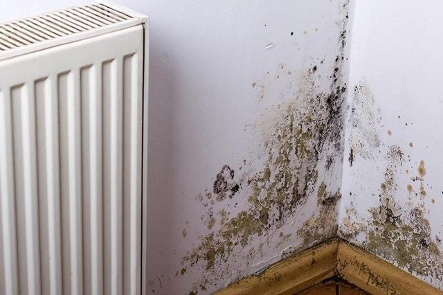 The motion also makes specific reference to damp, which has been a common cause of complaints among council housing tenants in Edinburgh for some time.