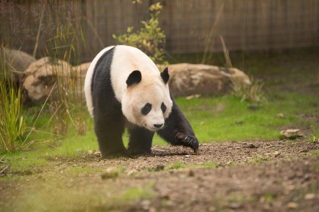 Edinburgh Zoo Live Cam