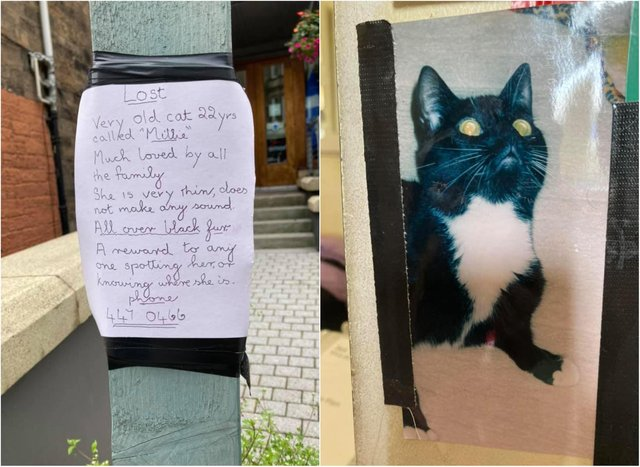 Local animal charity ask Morningside locals to help find missing cat
