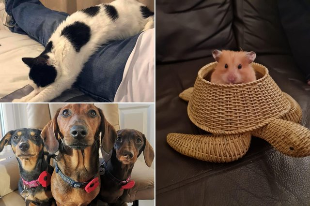 A selection of your cute and funny pets.