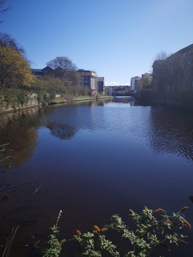 The body of a man has been pulled from the Water of Leith near Couper Street this morning.