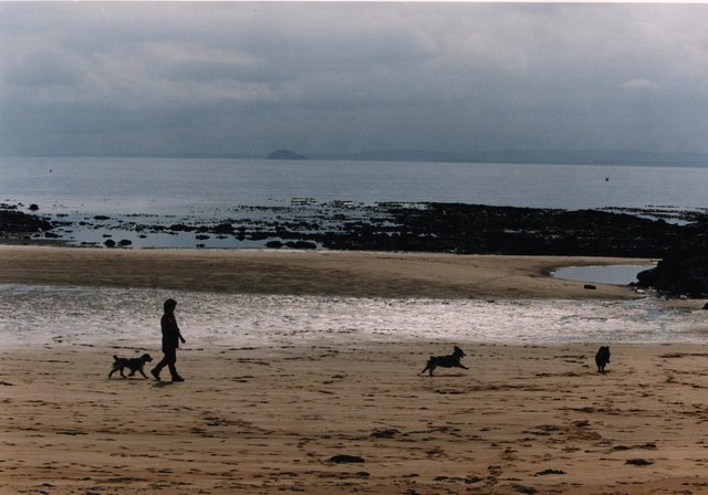 Here are the best places to take your dog within driving distance from Edinburgh