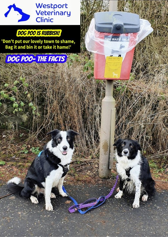 Westport Vets in Linlithgow has launched a campaign to educate the public about the importance of picking up dog poo.