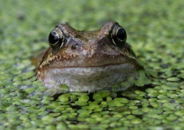 The frog gave the mum-of-four the fright of her life.