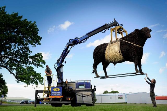 One-tonne wicker Beltie bull arrives in Edinburgh for Royal Highland Showcase PIC: Colin Hattersley