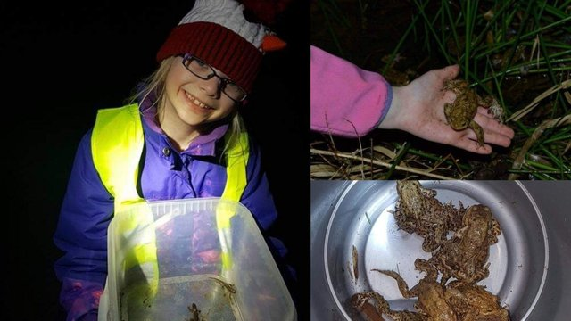 Alex Jamie Perdue aged 5 during her first year on a night toad patrol in East Linton (Photo: Dawn Perdue).