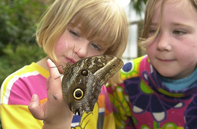 Emma Martin (8) and her sister Claire (4) holding a South American owl butterfly at  Butterfly World