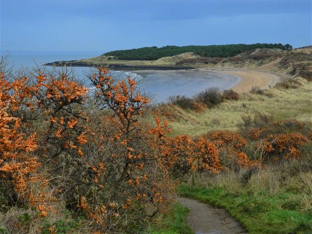 Gullane Bents - Gullane Bay from the car park.JPGNick Drainey