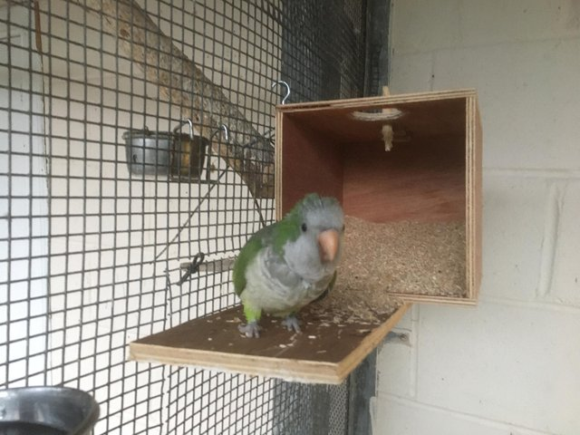 Pollyanna was reported missing from its aviary at Lewisvale Park on Thursday morning. Pic: Adam Gordon