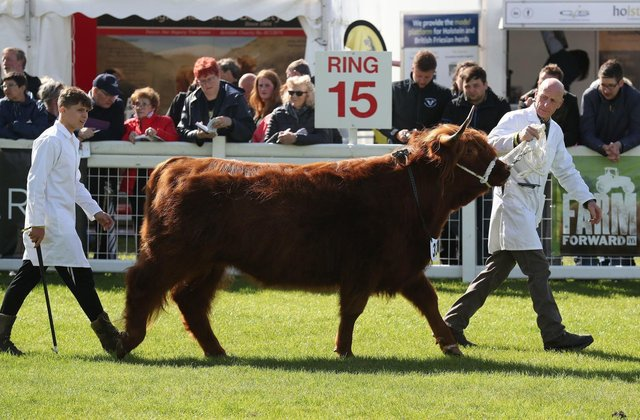 The 2021 Royal Highland Show will not go ahead as planned.