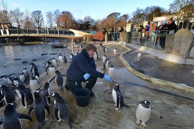 Edinburgh Zoo is losing £640,000 every month it is shut