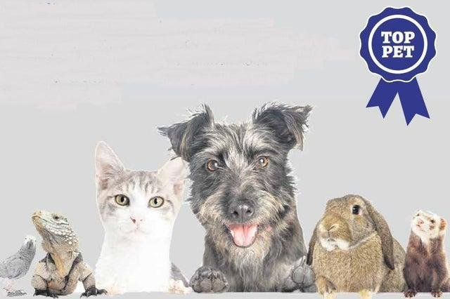 Does your pet have what it takes to win our competition?