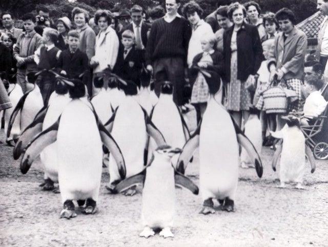 Edinburgh Zoo turns 107 this year