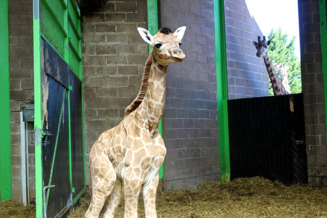 Gilbert as a baby in Belfast