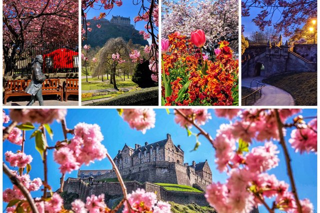 These are some of the best spring pictures from around Edinburgh