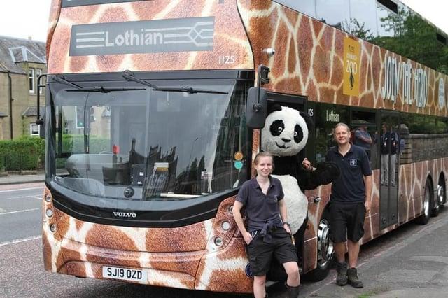 Spot the Giraffe print buses