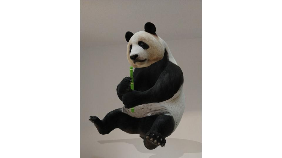 Google 3d Animals How To See Ar Tigers Pandas Lions Penguins
