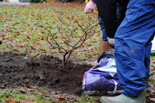 Planting trees is a good way to soak up carbon dioxide from the atmosphere (Picture: Michael Gillen)