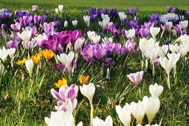 These 12 gorgeous pictures show that spring has almost sprung in Edinburgh.