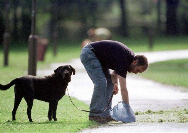 A rise in dog fouling complaints has been recorded in West Lothian over the past year.