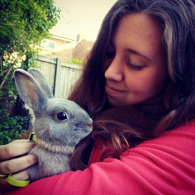 Jollyes, the nationwide pet store, is taking action to protect pets over Easter by putting a temporary bunny ban in place.
