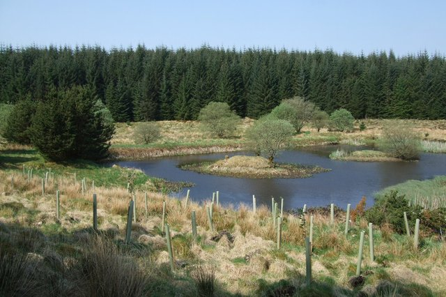 Scottish Woodlands site in Dumfries & Galloway.