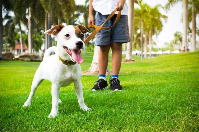 This is what you need to know about walking your dog during the lockdown (Photo: Shutterstock)