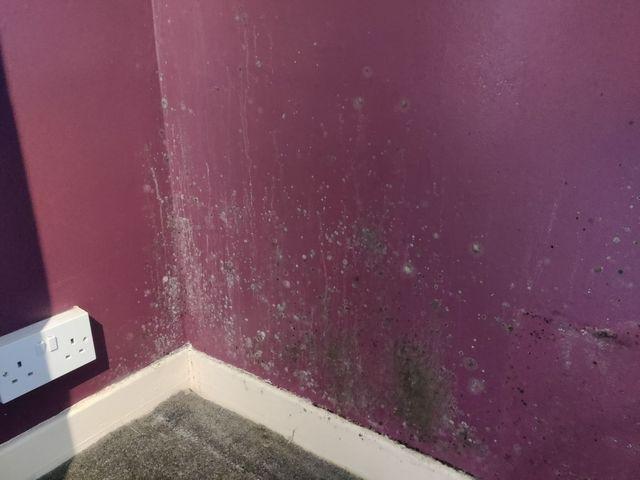 Health hazard: Mould spores