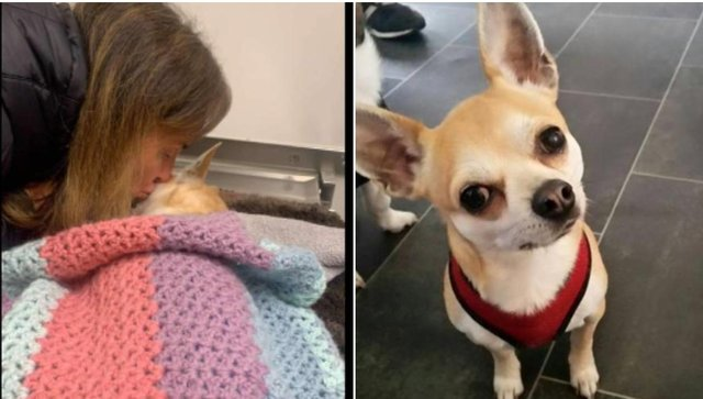 The 'Justice for Chicco' petition  calls for an urgent change in the law and give more powers to police in dealing with similar attacks.