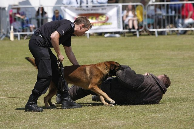 Police dogs are trained to deal with thugs like Brian Mallon