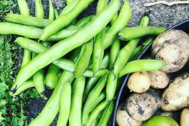 The Growing Locally strategy takes a look at the ways Edinburgh can tackle food insecurity and improve access to fresh food