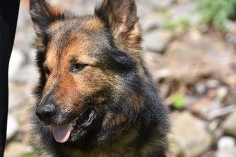 Canine crime fighter: PD Storm