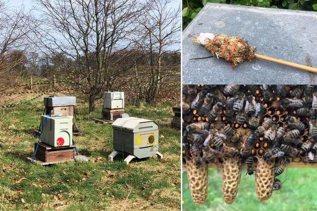 Hive on the left with the red mark is the portable one - the 'nuc' -  that is believed to have been stolen. The tool in the top right is the make-shift smoker Amanda Moffet found at her apiary on Saturday morning and the queen cells pictured bottom right were what she had put in the nuc box with other bees to hatch a new queen.