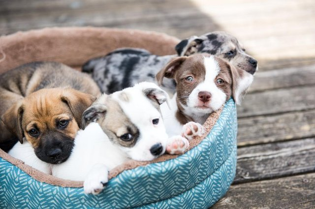 The pup cycle scheme encourages customers to send back the collars so that they can be refurbished and sent to dogs' homes across the UK
